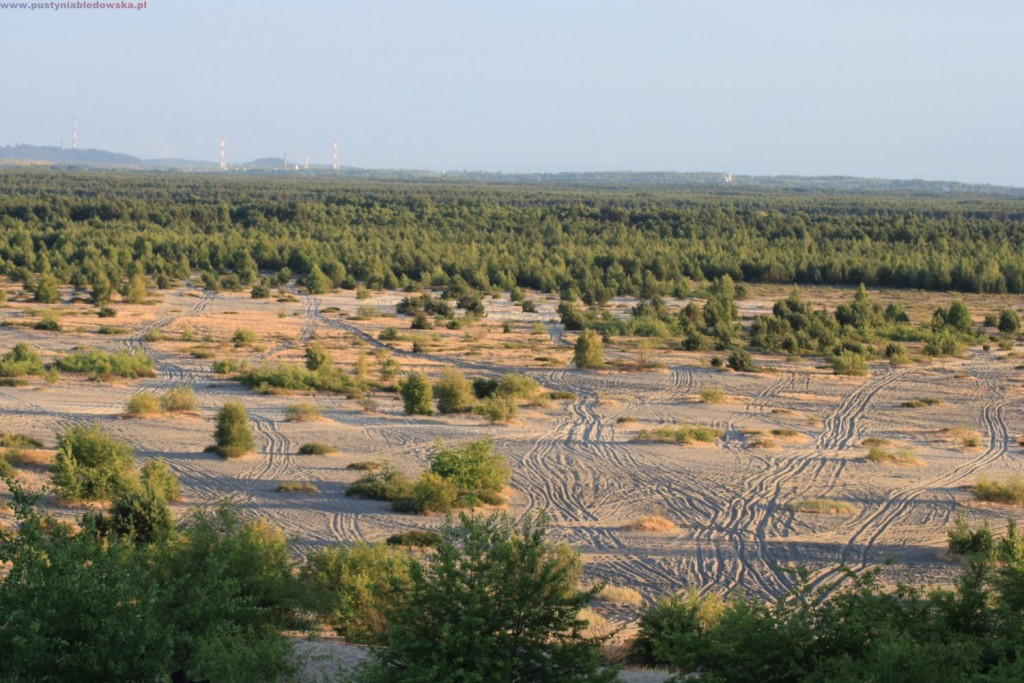 Pustynia Błędowska - widok z Chechła